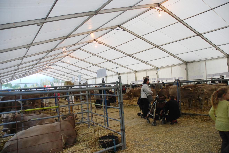Carpas para Feria de Otoño de Biescas | ARACARPAS - Empresa de carpas, jaimas y cerramientos